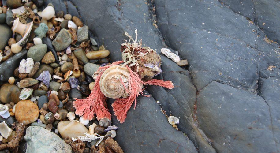 Seaside finds, Minnie Water